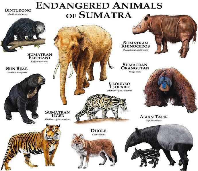 hewan asli sumatera yang hampir punah