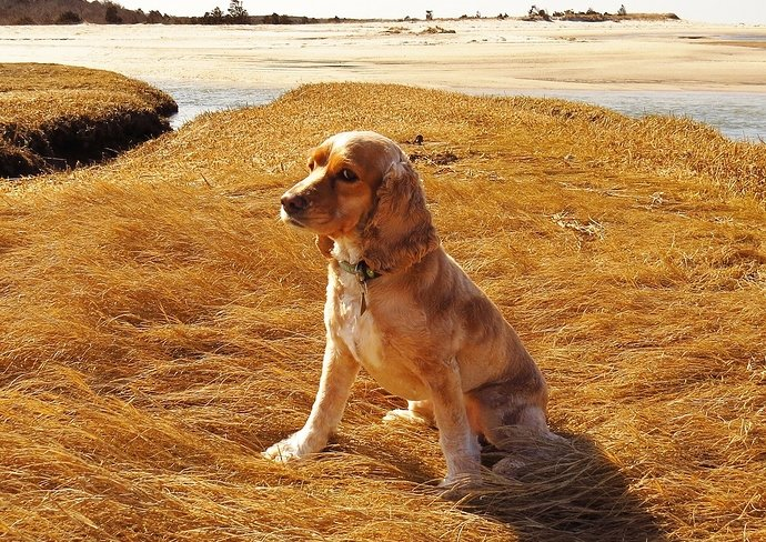 dog-291758_1280
