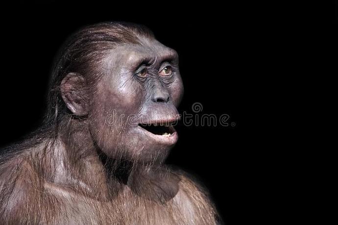 australopithecus-afarensis-expression-one-our-most-ancient-ancestors-137225508