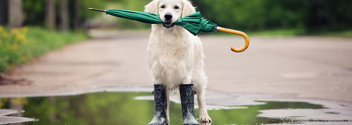 dog-holding-umbrella