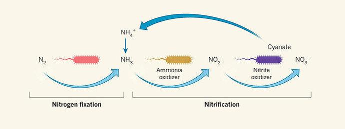 Proses Kimia Fiksasi Nitrogen dan Nitrifikasi