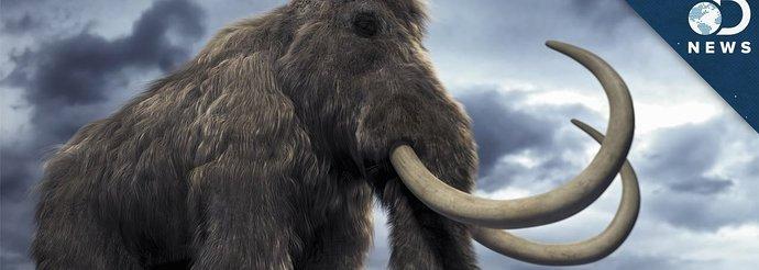 mamoth