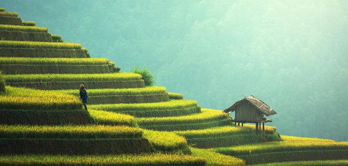 Ekosistem pertanian