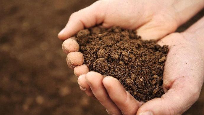 kekurangan kelembapan tanah