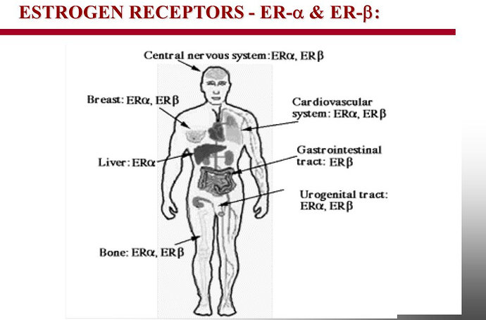 Reseptor Estrogen