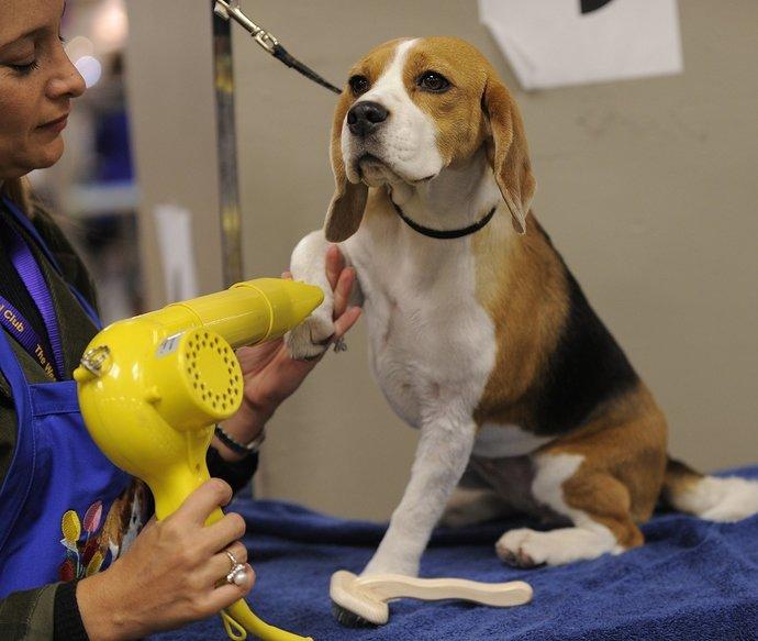 beagle-grooming-supplies