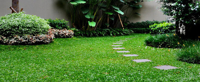 rumput gajah mini