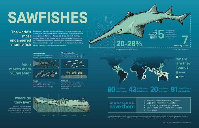 Ikan Gergaji atau sawfish