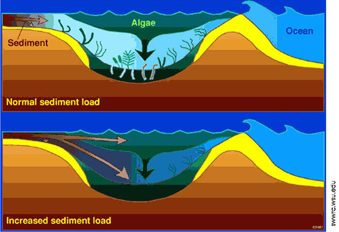 sedimentasi