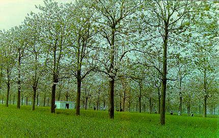 Apa yang dimaksud dengan Agroforestri? - Ilmu Pertanian - Dictio Community