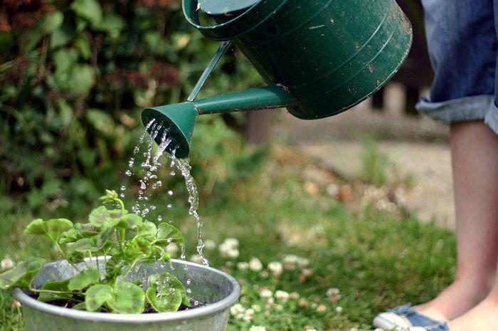 keperluan air optimum?