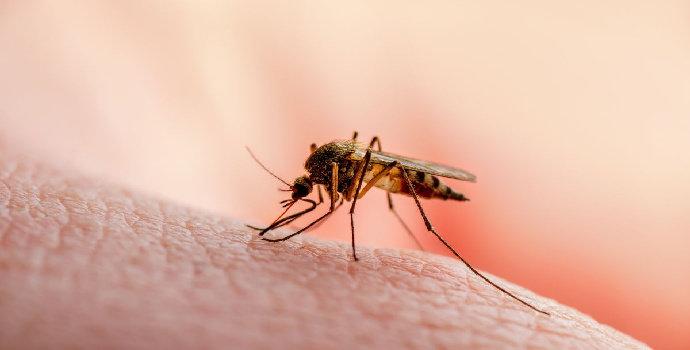 Gigitan Serangga Meninggalkan Rasa Gatal di Kulit
