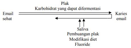 Interaksi faktor-faktor etiologi karies gigi.