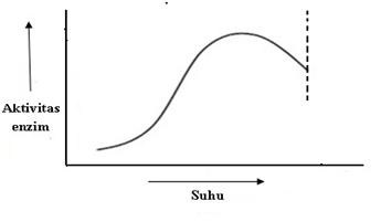 Hubungan aktivitas enzim dengan suhu