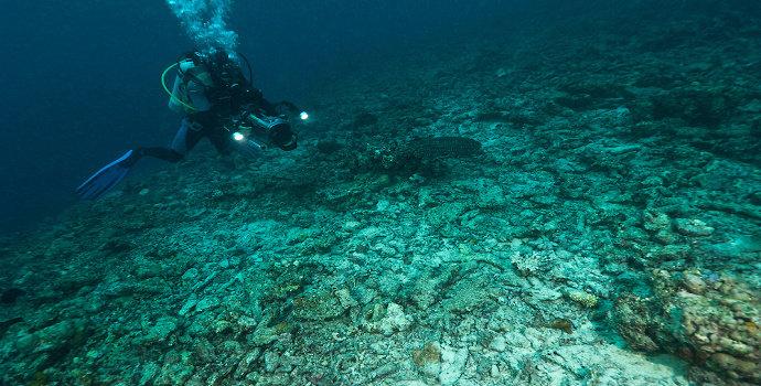 penggunaan racun sianida terhadap ekosistem perairan laut