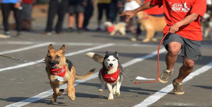 Apa yang Anda ketahui tentang anjing dalam olahraga dan pelayanan?