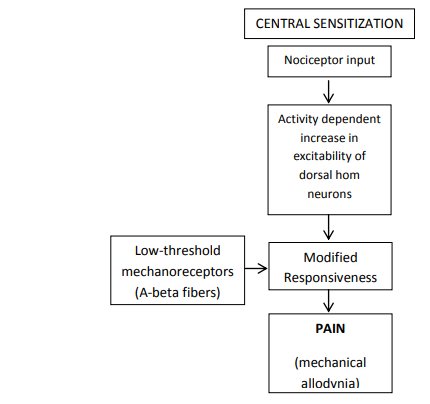 Mekanisme sensitisasi central