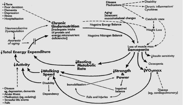 Gambar 1. Siklus frailty syndrome. Sumber: Fried et al., 2003.