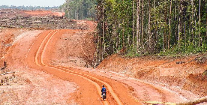 dampak eksploitasi hutan