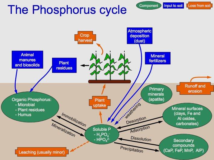 Siklus P tanah