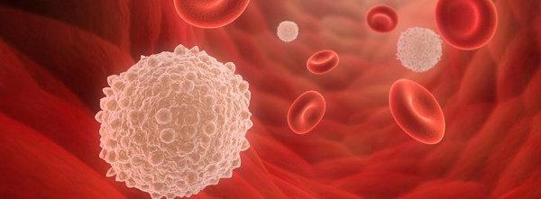 Sel darah putih dalam keadaan normal