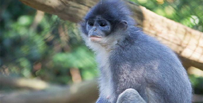 hewan endemik di taman nasional ujung kulon
