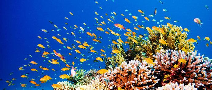 Apa Yang Dimaksud Dengan Ikan Karang Atau Ikan Terumbu Karang Kelautan Dictio Community
