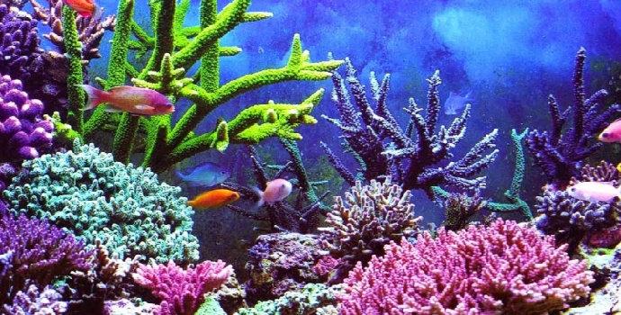macam-macam terumbu karang