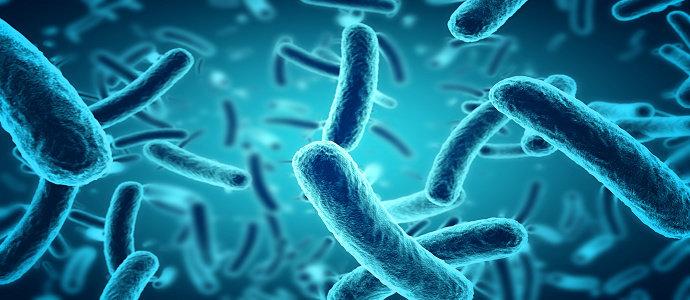 Apa yang anda ketahui tentang Probiotik untuk kesehatan ...