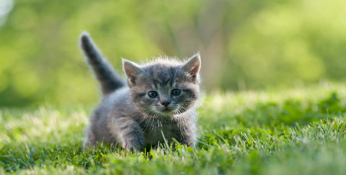 Bagaimana Cara Merawat Anak Kucing Yang Baik Dan Benar Hewan Peliharaan Dictio Community