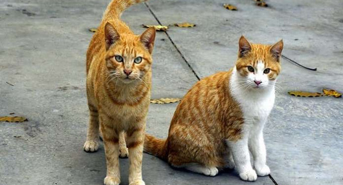 Download 95+  Gambar Kucing Asli Paling Keren HD