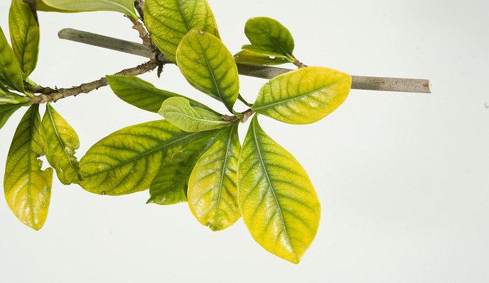 Defisiensi nutrisi tanaman