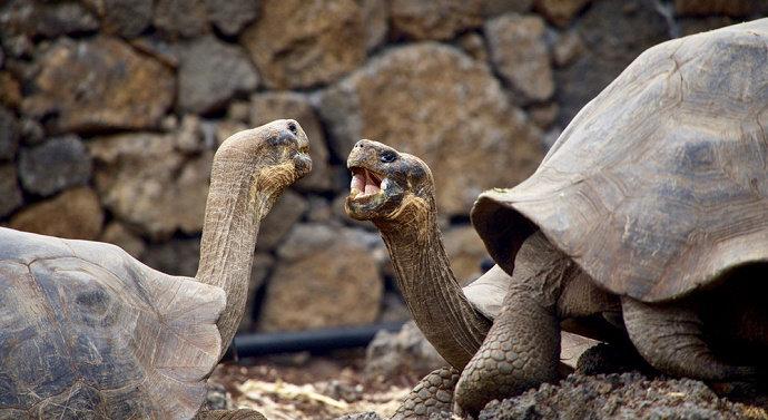 Kura-kura, bulus, dan penyu