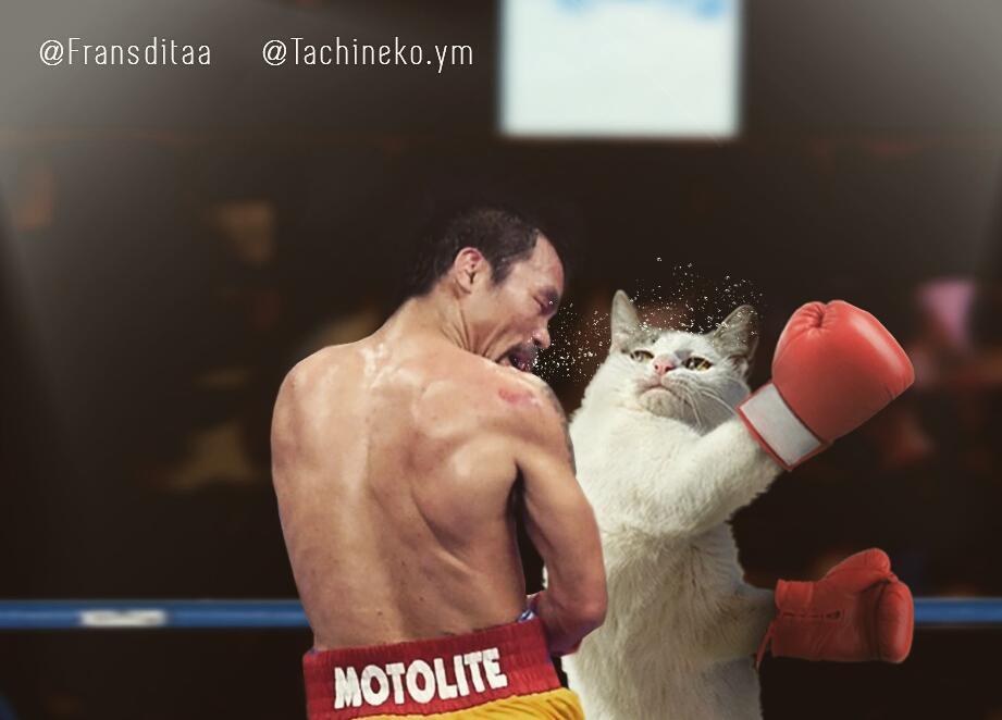 Unduh 101+  Gambar Kucing Lucu Menggemaskan Paling Bagus Gratis