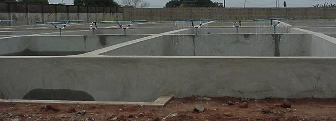 Bagaimana cara budidaya Ikan Nila di kolam beton ...