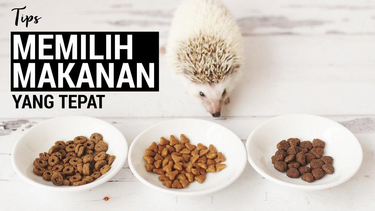 Tips Memilih Makanan Untuk Landak Mini Hewan Peliharaan Dictio