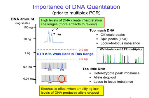 Kuantifikasi DNA dalam PCR