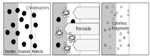 Skema ilustrasi reaksi oksidasi hidrogen peroksida pada kromofor