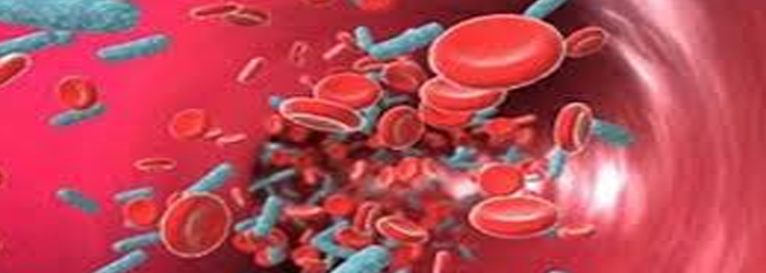 Bakterima