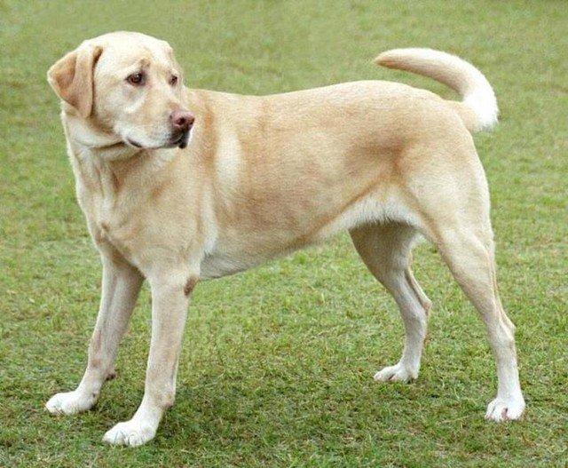 Mengapa Anjing Tidak Mau Makan Makanan Kalengan Hewan Peliharaan Dictio Community