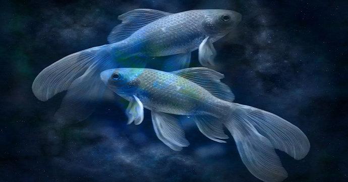 Pisces atau biasa disebut ikan