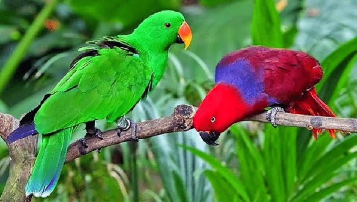 Berbagai-Jenis-Burung-Beo-di-Indonesia-dan-Karakteristiknya