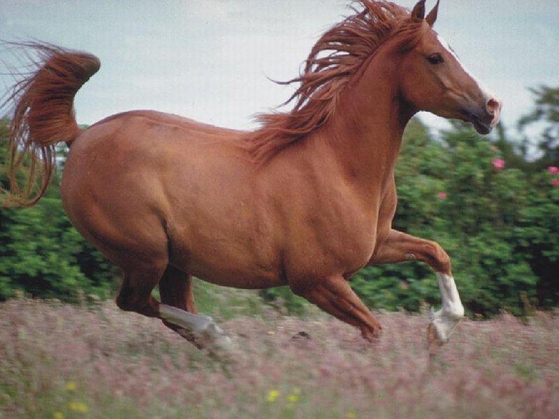 zwierzeta-konie-800-600-3476