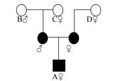 Ahli waris golongan III harta warisan dibagi dua sama besar