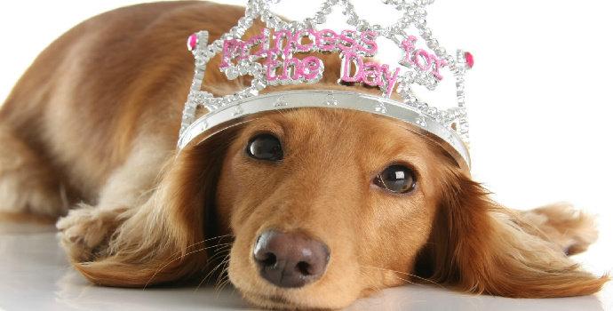 Apa yang Anda ketahui pada sifat biologi anjing saat menstruasi ?