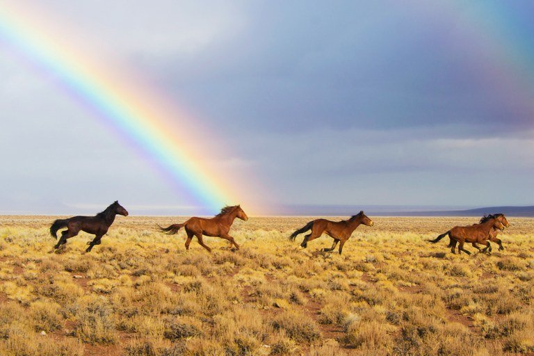 horse rainbow
