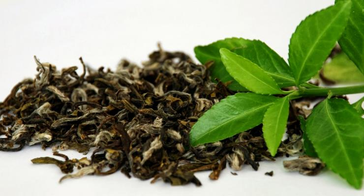 daun-teh-hijau