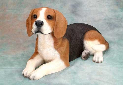 beagle-dog-4
