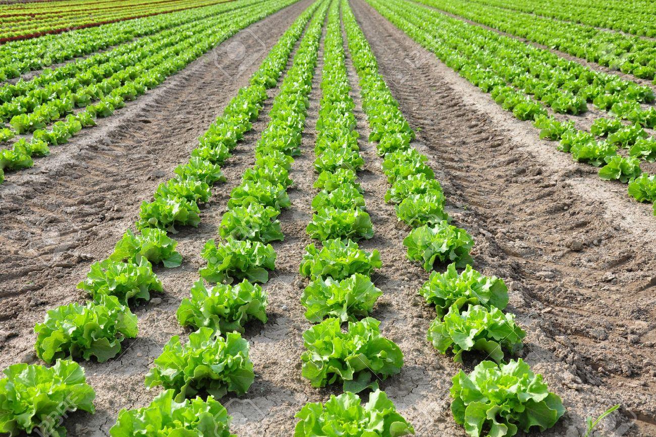 Apa Itu Pertanian Organik Diskusi Pertanian Dictio Community