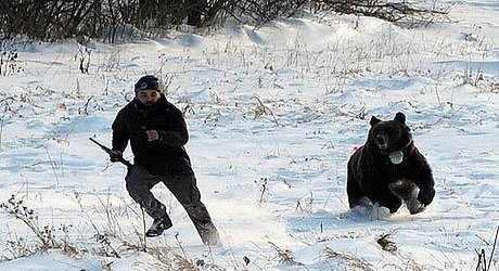 rsz_bear_chase